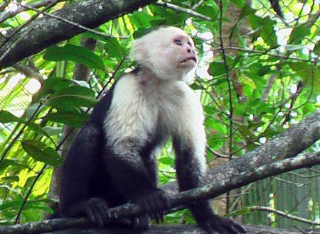 Costa Rica – Península de Osa – Cabo Matapalo