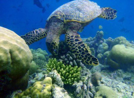 Maldive il sogno tropicale